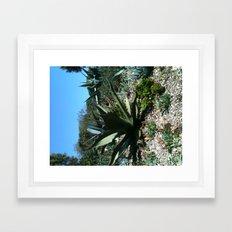 Small cacti Framed Art Print