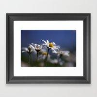 Daisies 3610 Framed Art Print