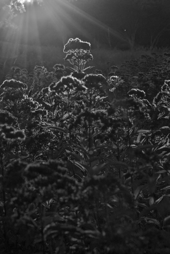 Sunlit Meadow Art Print