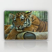 Baby Tiger Laptop & iPad Skin