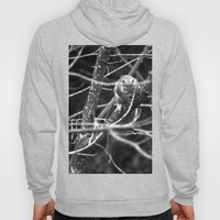 Squirrel in Black and White Hoody