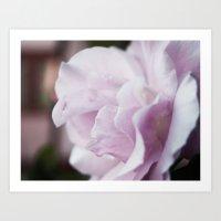 The Lilac Rose Art Print