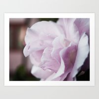 The Lilac Rose Art Print