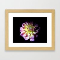 Blooming In The Darkness Framed Art Print