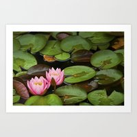 Lily Pads with Blossoms No 201 Art Print