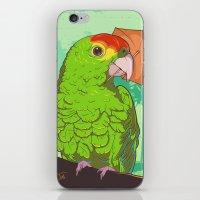 Parrot illustration iPhone & iPod Skin