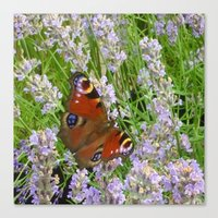 A Peacock Butterfly On A Laveder Bush Canvas Print