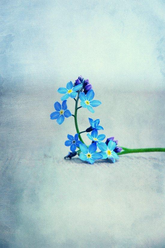 hyacintho Art Print