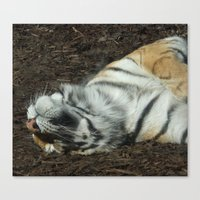Lazy Days Sleeping in the Sun Canvas Print