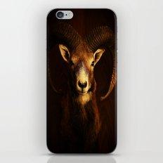 Mouflon iPhone & iPod Skin
