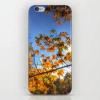 Autumn Arrival iPhone & iPod Skin