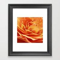Orange Rose Petals IX Framed Art Print
