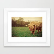 Scottish Highland Steer - regular version Framed Art Print