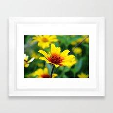 Prairie Flower Framed Art Print