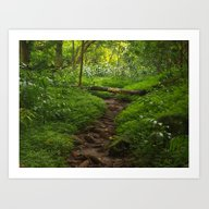 Forest Haven In Iao Vall… Art Print
