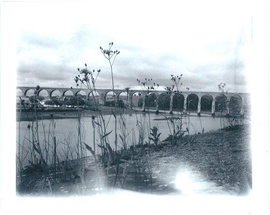 Flowers in the Wall, Berwick Art Print