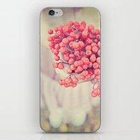 Mountain Ash iPhone & iPod Skin