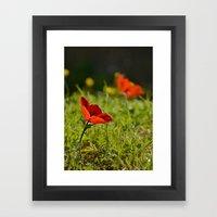Solitary Anemone Framed Art Print