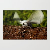 Ready For Take-Off Canvas Print