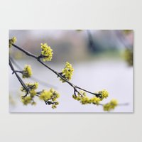 Every Flower Is A Soul B… Canvas Print
