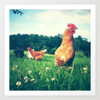 The Life Of A Chicken Art Print