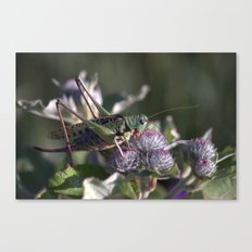 Grasshopper 4110 Canvas Print