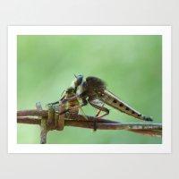 Robber Fly And Bee II Art Print