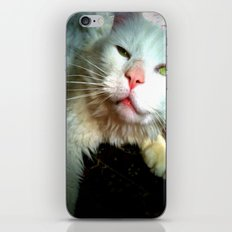 crazy kitty iPhone & iPod Skin