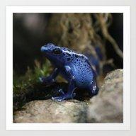 Blue Poison Arrow Frog Art Print