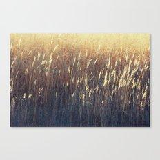 Amber Waves No. 2 Canvas Print