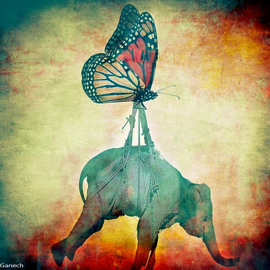 The elephant and the butterfly Canvas Print