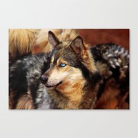 old blue eyes Canvas Print