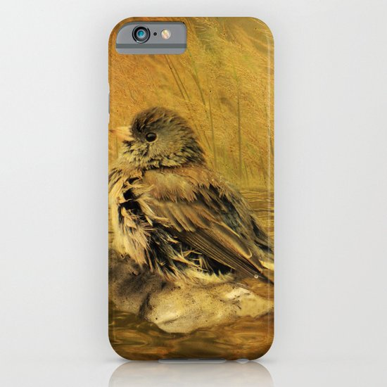 The Bathing Junco iPhone & iPod Case