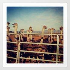 Ostrich Farm Art Print