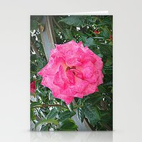 rosa rosa Stationery Cards