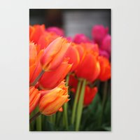Cheery Tulips Canvas Print