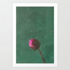 Peony Pink Art Print
