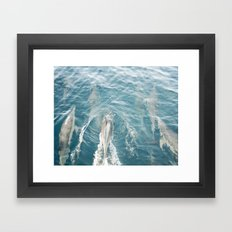 Dolphins Come Play  Framed Art Print
