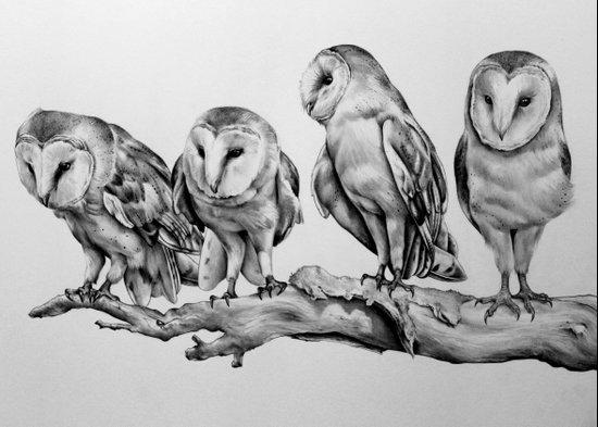 Barn Owls Art Print