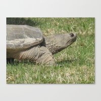 Canvas Print featuring Turtle by Joy Reyes