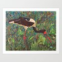 South African Bird Art Print