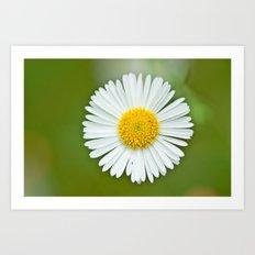 One little Daisy 184 Art Print
