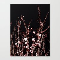 Winter Night Flowers Canvas Print