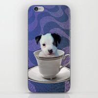 Pup in a Cup iPhone & iPod Skin