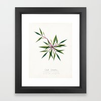 Crab Grass Modern Botanical Framed Art Print