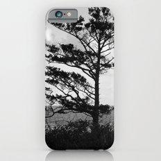 Tree Beside the Ocean iPhone 6s Slim Case
