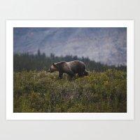 Gizzly Bear Art Print