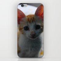 ORANGE CAT. iPhone & iPod Skin