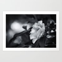 Just Enough Light to Bloom Art Print