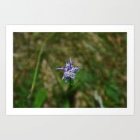 Mountain Flower Art Print